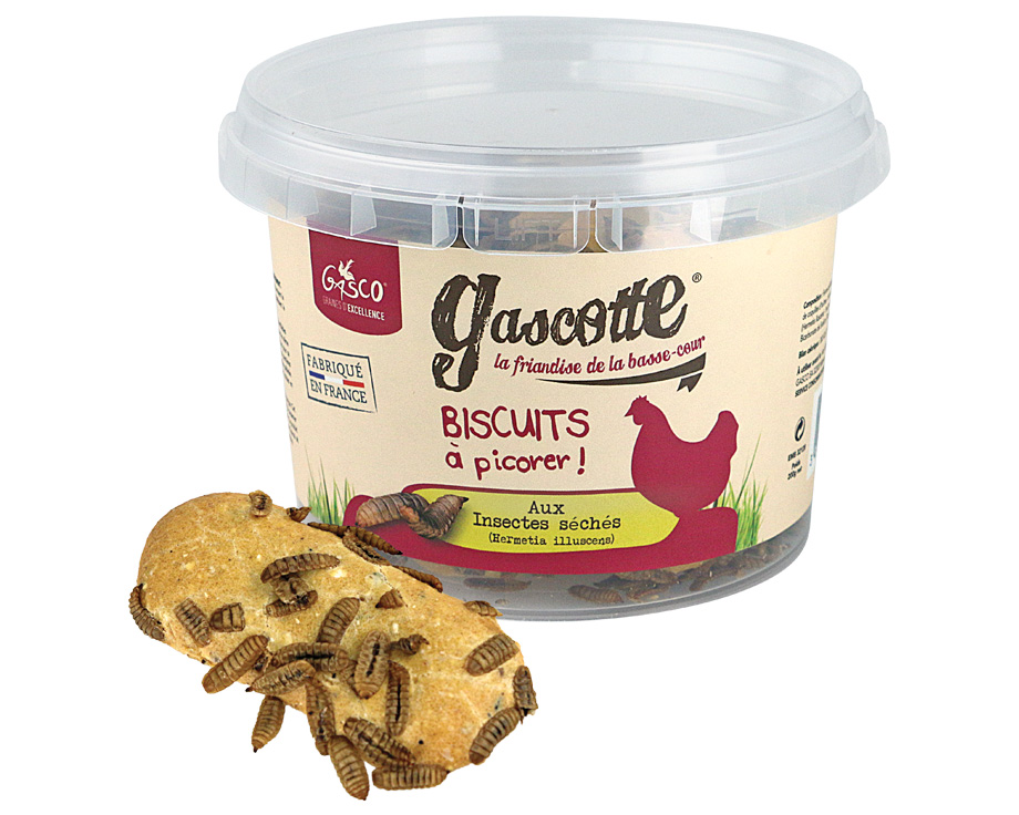 Biscuits aux insectes séchés