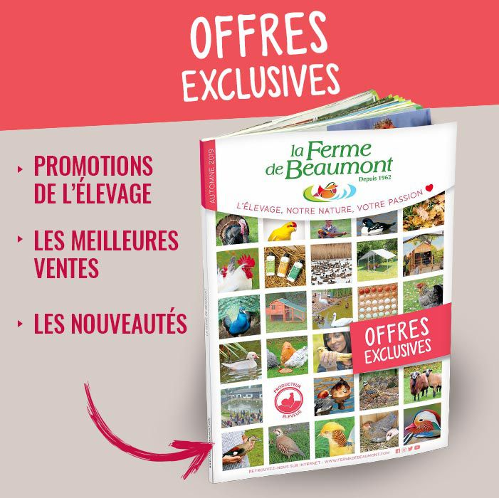 Offres exclusives 2019