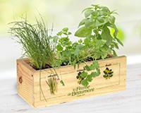 Coffret de plantes aromatiques