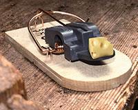 Tapette à souris en bois FSC