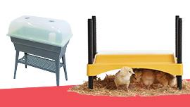 L'élevage des poussins
