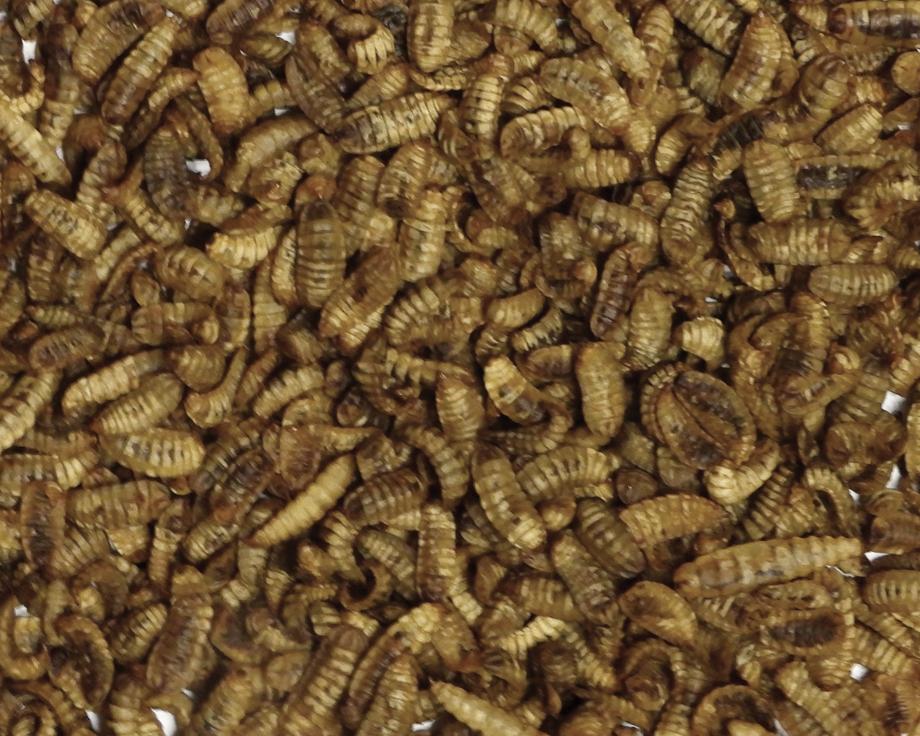 Insectes séchés Crunchy