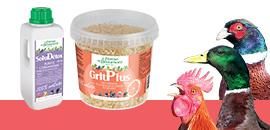 Aliments complémentaires : fortifiez vos volailles
