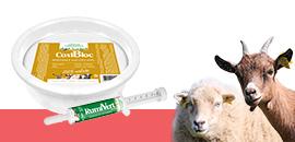 Bien-être de vos moutons et chèvres