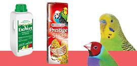 Chouchoutez et prenez soin de vos oiseaux exotiques
