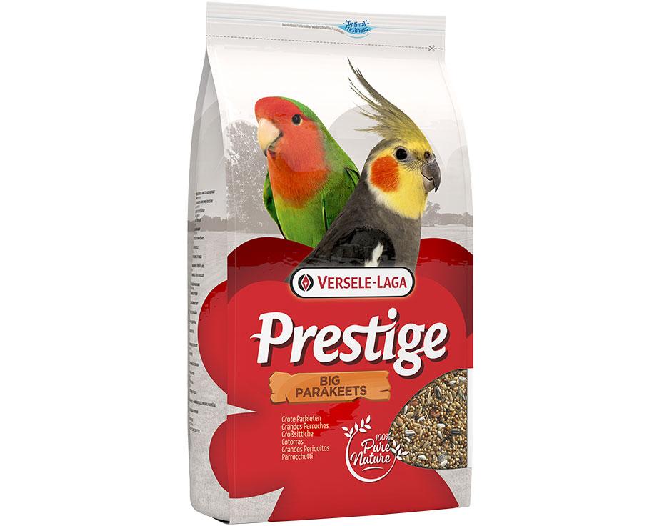 Big Parakeets Prestige