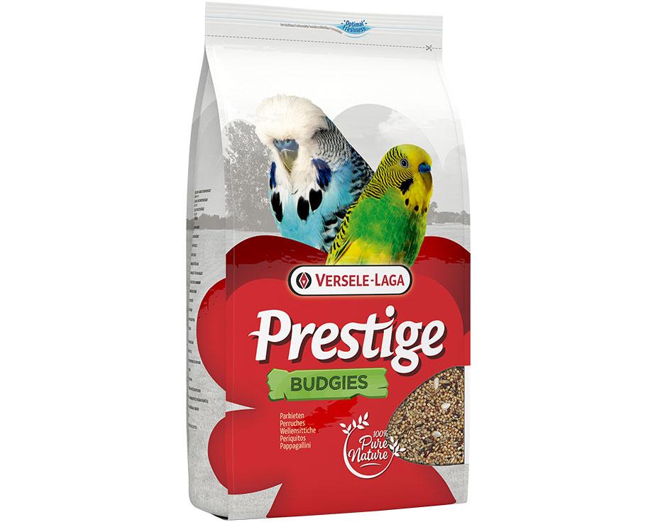 Budgies Prestige