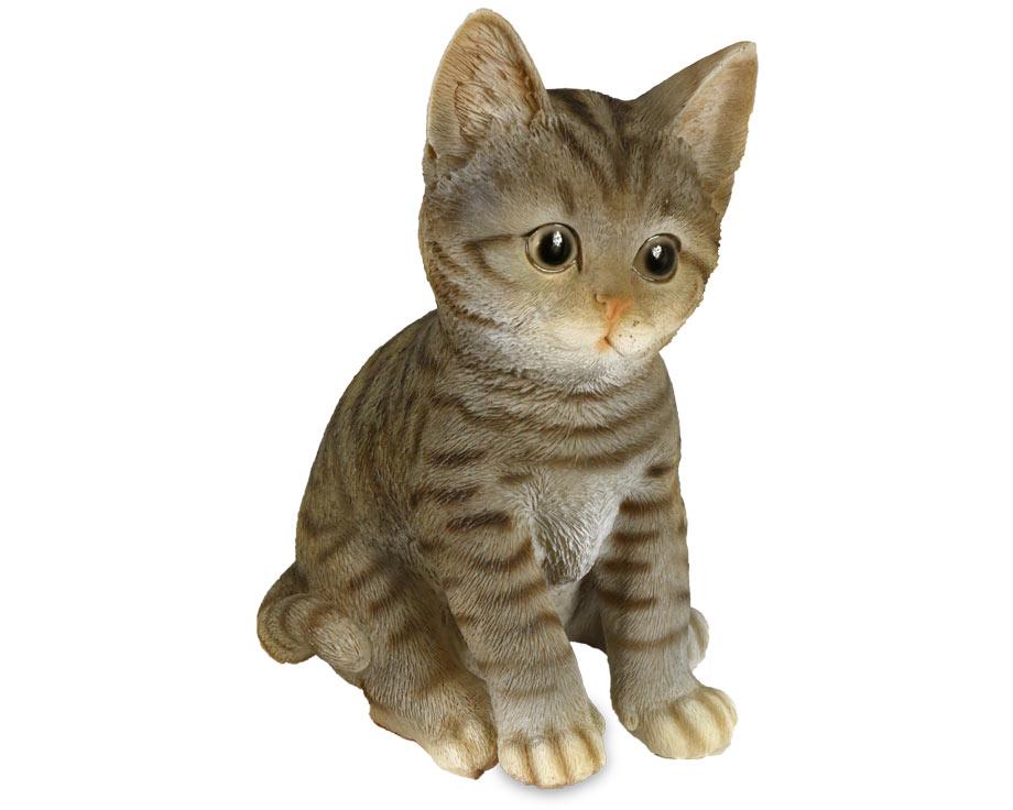 Cat  Assis
