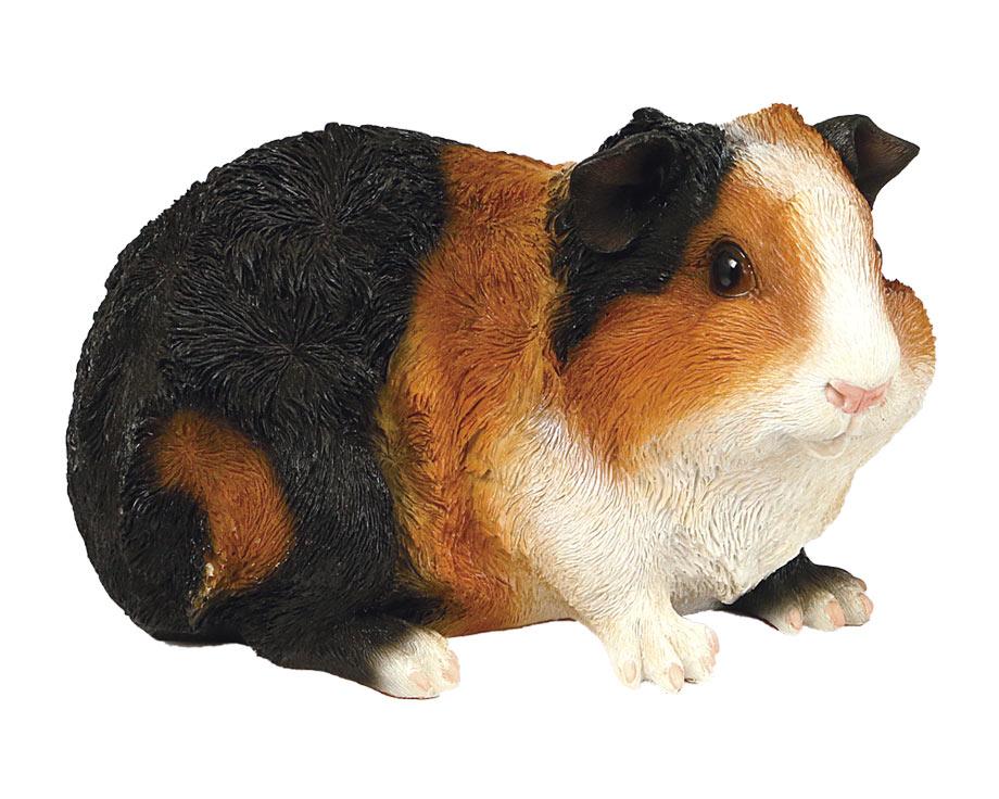 Cochon d'Inde abyssin en résine