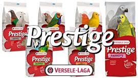 Prestige graines Versele-Laga