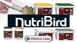 NutriBird élevage à la main