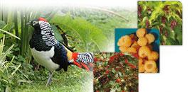 Plantes Poules, faisans, volailles