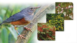 Plantes oiseaux de volière