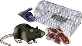 Contre les rats et les souris