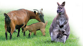 Les grands mammifères