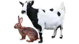 Les lapins et les animaux de parc