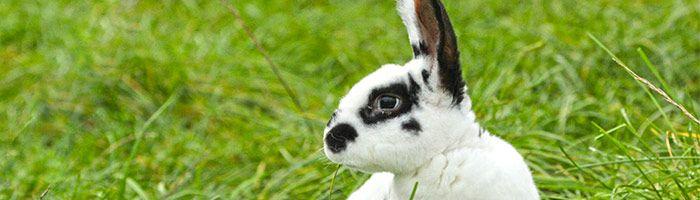 Conseils d'élevage Ferme de Beaumont lapins