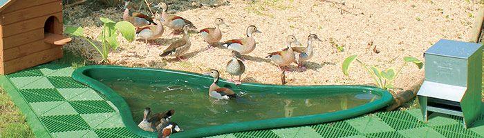 Parc à canards avec bassin, mangeoire et nichoir