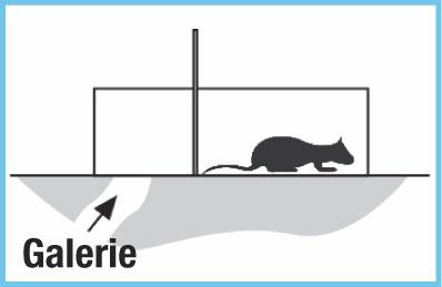 Piège à rat