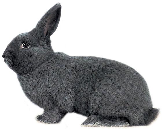 Connu Lapin bleu de Vienne : la Ferme de Beaumont, Les lapins YH61
