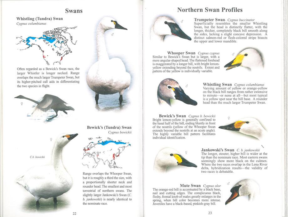 Handbook of Waterfowl identification