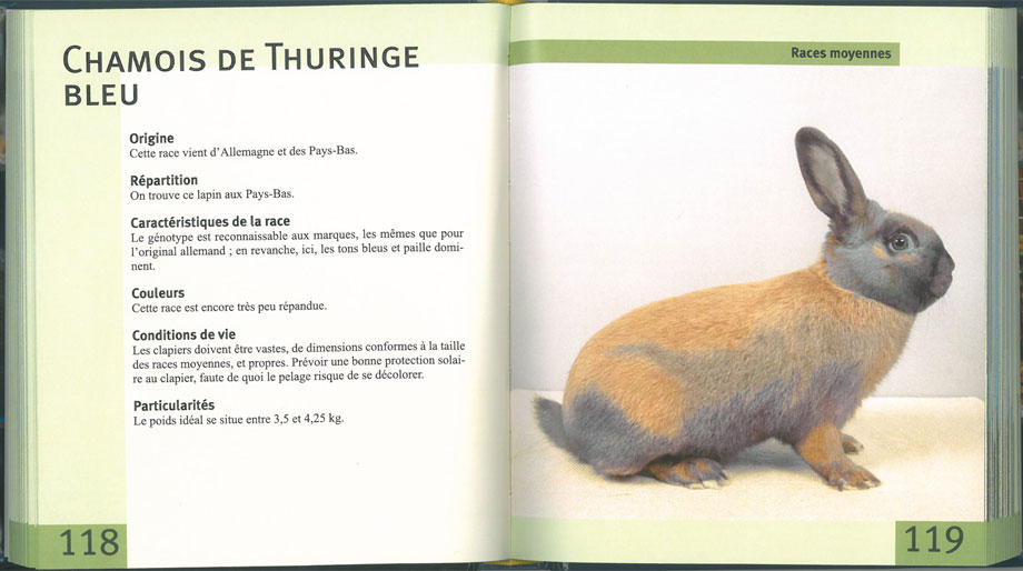 Lexiguide des lapins
