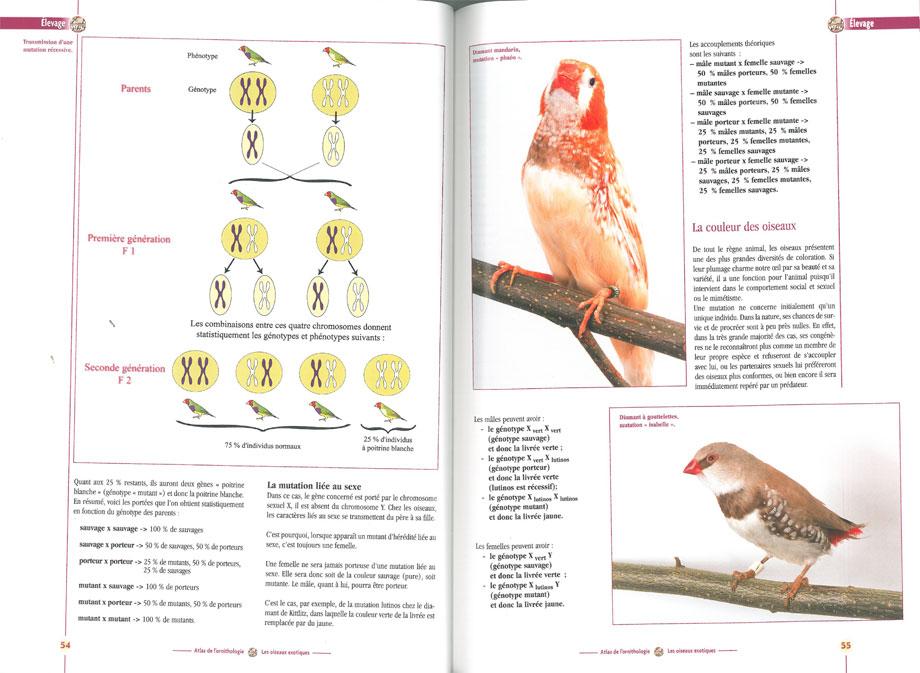 Atlas de l'ornithologie vol. 2