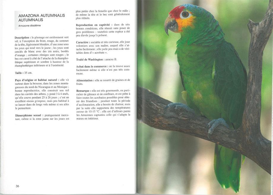Les perruches et perroquets
