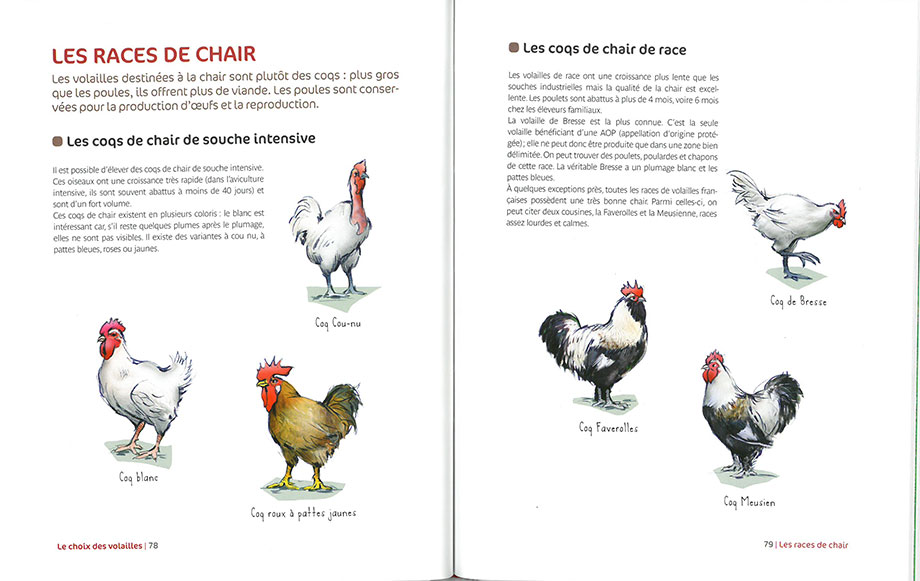 livre petit abc rustica de la poule jean claude p riquet l. Black Bedroom Furniture Sets. Home Design Ideas