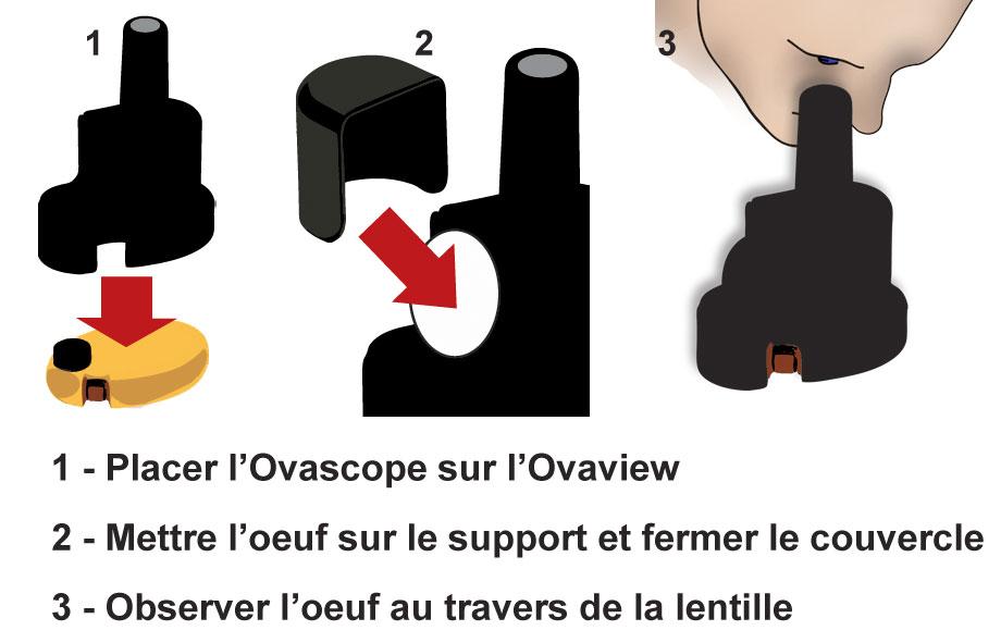 Mire-oeuf Ovaview Ovascope