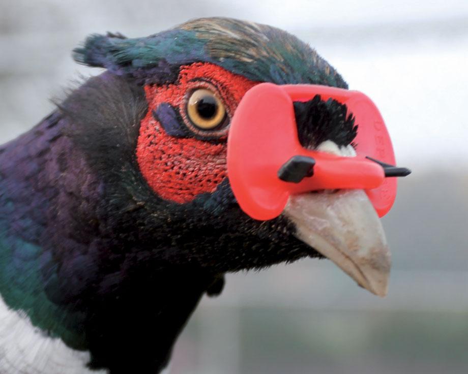 en ligne ici aliexpress se connecter Lunettes à volailles : la Ferme de Beaumont, Lutte contre le ...