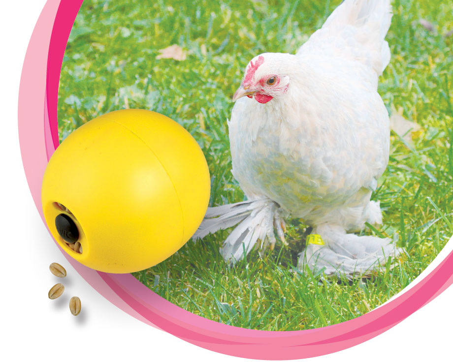 La boule Chicken Fun
