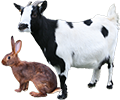Les lapins et animaux de parc