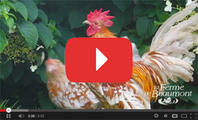 Cha�ne Youtube Ferme de Beaumont