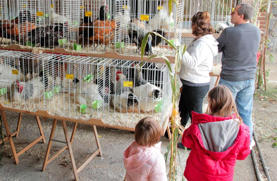 Exposition de matériel d'élevage