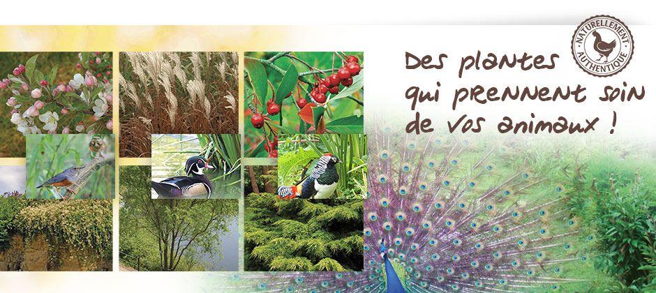 Des plantes qui prennent soin de vos animaux !
